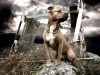 Staffordshire terrier wallpaper